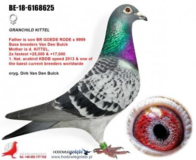 GOL_897361-7AEE8F-8D83FE-29380E-A08297-81000D.jpg
