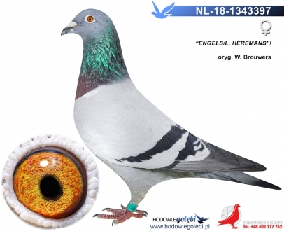GOL_8A60B6-6608E7-DDDE77-BAE9E0-64FFB5-297CD7.jpg