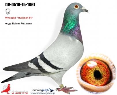 GOL_8B2D18-DA7C0C-490778-274909-F29C73-51C36C.jpg