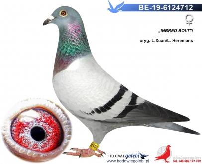 GOL_8B3769-91C49B-E8EC96-C2A8B1-038DAF-F39B18.jpg