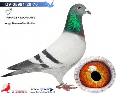 GOL_8D7661-580519-0FC2FC-F8A27B-0BB42E-8F52CF.jpg