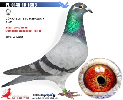 GOL_8DA0AC-801941-59DDBF-39CEC3-B33E93-A55F98.jpg