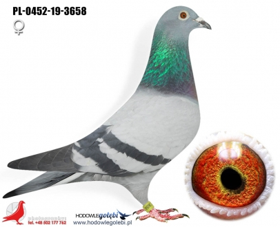 GOL_8DAED2-32C962-9DA293-2133EB-029B27-F18BB6.jpg
