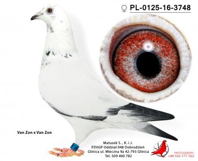 GOL_8DE23E-B7EC93-FE6780-863AF0-3520C5-546604.jpg