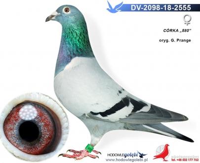 GOL_8EAC26-B81CBA-9B9E64-5ADE0A-93BF78-816FE5.jpg
