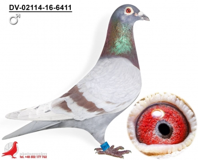 GOL_91746F-674B54-2CD306-C54D2A-72A5DF-A212F7.jpg