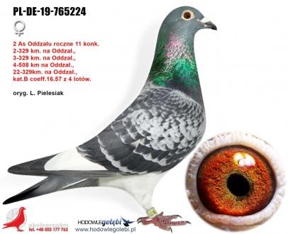 GOL_961912-46FD6B-DA62DD-B32CF5-672E89-0C470B.jpg