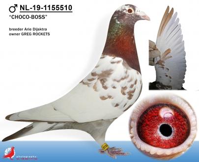 GOL_97E56D-6537C2-A6523E-BDAC65-DED096-17B215.jpg