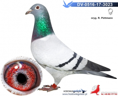 GOL_98D99F-AB98D8-931227-C5A8BD-C60EFC-6DAD05.jpg