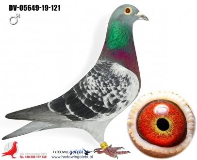 GOL_9B1176-464EA3-266C00-E9B057-E63BB2-BFA03C.jpg
