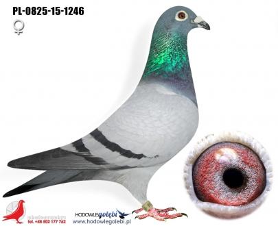 GOL_9D4623-8037E0-3591AA-B7C3A0-D4974A-9A03C0.jpg