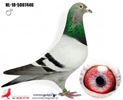 GOL_9D5E69-ECFE6D-F1A633-64F6F9-3126CD-C8BEF5.jpg