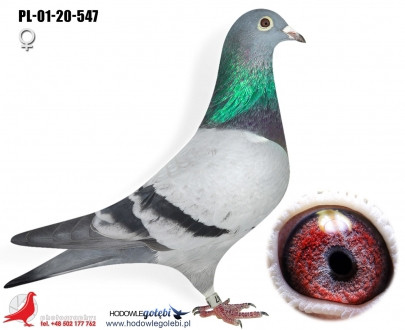 GOL_9E36B8-A1443E-3C2EB6-47BE38-237D2F-54B9FE.jpg