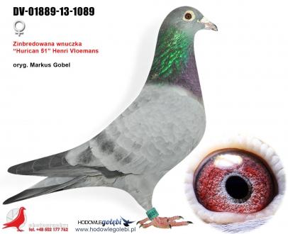 GOL_9F0415-095860-9D0D9A-B680D8-84A060-5597AD.jpg