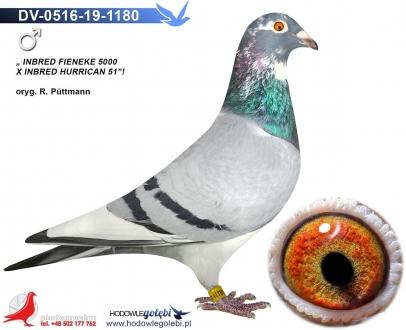 GOL_9FA273-C3AAC9-2D2B91-A465E5-94EBB2-7CED14.jpg