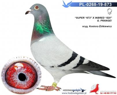 GOL_A1694B-D082E5-F7C041-870F66-26F9D7-7D5592.jpg