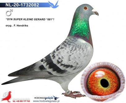 GOL_A2F57D-0F24A1-89B932-38A359-A290EE-87C18A.jpg