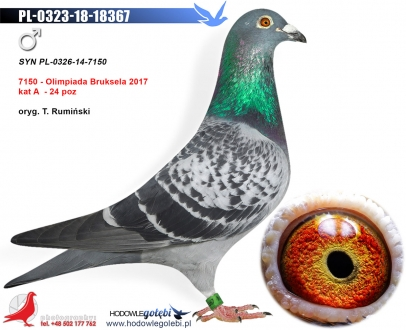 GOL_A39221-48440C-0F372F-6C41E8-F1260E-39586D.jpg