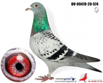 GOL_A412DB-60264E-27A449-74EF10-9D59F9-B7F9FD.jpg