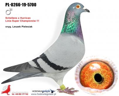 GOL_A4C556-8ECC37-FC07E9-1B0420-4FCF22-9A7DED.jpg