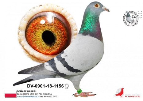GOL_A4D366-596047-8202C1-98B460-5CF15F-4501CD.jpg