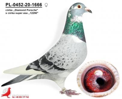 GOL_AAD7F9-80B154-ED2598-67D7C4-6C335D-834AE9.jpg
