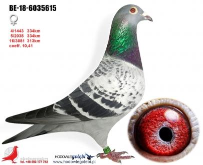 GOL_AD5113-B211DF-1F2669-CE8DF4-126955-CD8C43.jpg