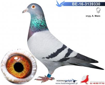 GOL_AD87DF-2D0040-6D94F8-489EE0-1193A8-69B810.jpg