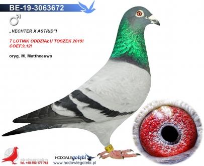 GOL_B00049-601EA1-38DC1B-8899E7-4F285E-DC23F7.jpg