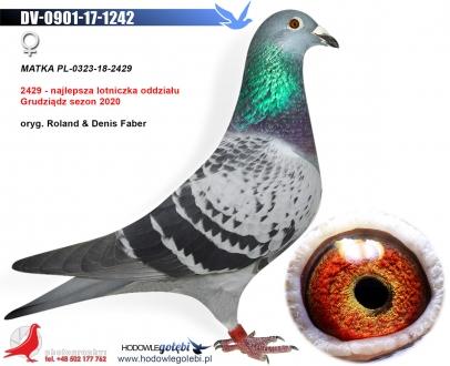 GOL_B02775-588E51-B9AE24-3BF602-557F75-7A410C.jpg