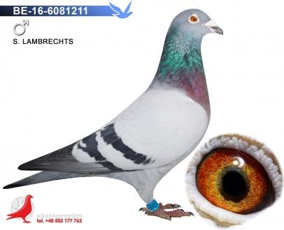 GOL_B029A6-E7C999-156996-06E605-F15EF0-84CCB5.jpg