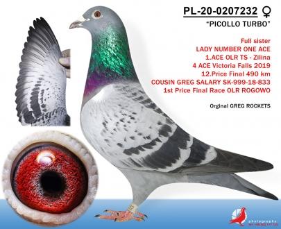 GOL_B06621-115FA6-A006F8-316883-9B853F-A034E2.jpg