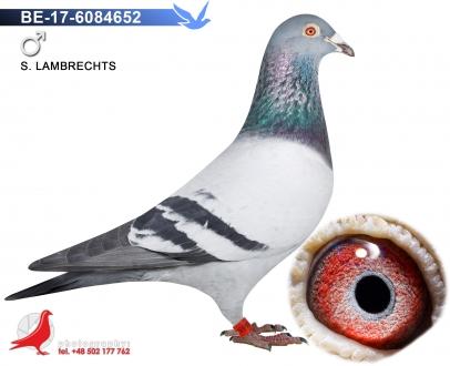 GOL_B1C5F3-AF58C8-C3CD37-7C1695-E45A98-555CC4.jpg