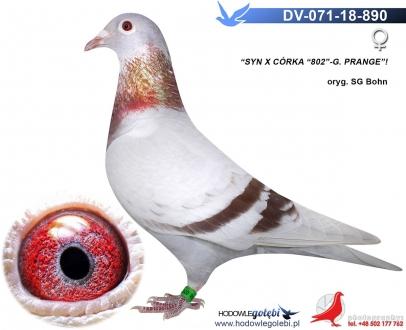 GOL_B1DA1B-838D05-FCE6C5-34AA44-DF9B17-6E1F65.jpg