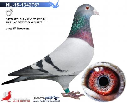 GOL_B254EB-C140AD-3AF533-0C0E71-EDCFC6-3DBEFE.jpg