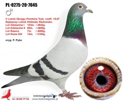 GOL_B3DF67-3F501B-F7C2AC-C4B5B7-B632E1-658754.jpg