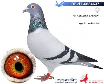 GOL_B53B30-9293BA-5D2583-3326A8-A882FB-CDDB14.jpg