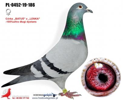 GOL_B88149-732B53-6613A3-074394-CF1F46-D35564.jpg