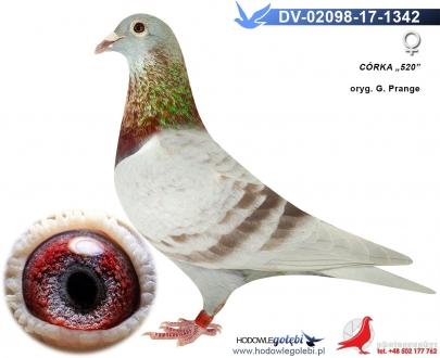 GOL_B8F51D-845997-506298-206C2A-E5D997-8B5578.jpg