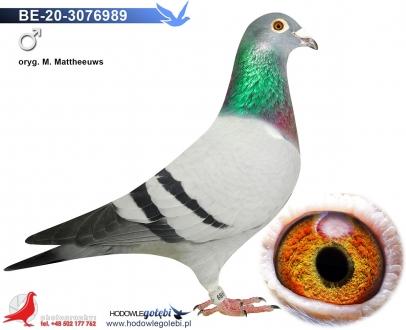 GOL_BF263B-7FE449-5E4E52-F932A1-4EEE58-062132.jpg