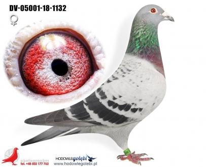 GOL_C0B043-24F08E-A187CB-6BAFC4-42C55E-5849D5.jpg
