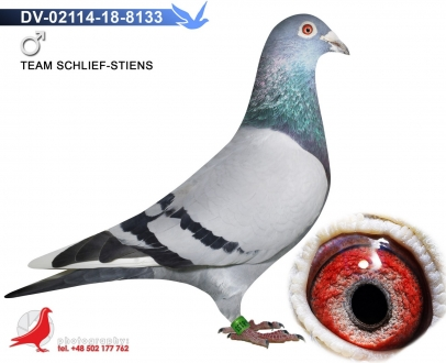 GOL_C214F1-E33394-C03ED7-914894-B2903D-3F958F.jpg