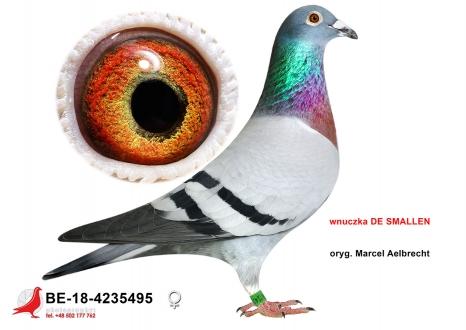 GOL_C37E27-EC9BC8-0027E4-2ED0B3-4EC999-5BA994.jpg