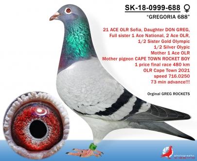 GOL_C428F3-4E245F-8F8841-1A4702-1F520F-089389.jpg
