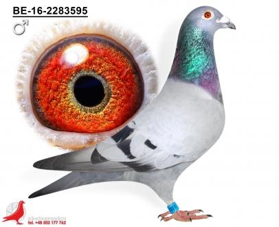 GOL_C5F34B-F944BD-36B0DF-B89917-456C81-16256B.jpg