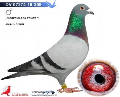 GOL_C6EDB2-A1019B-FDD28F-D86C4A-B137C7-5DB86F.jpg