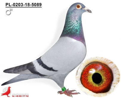 GOL_C72D7F-A13B08-B724EF-A41BD2-8E0398-1B4D9E.jpg
