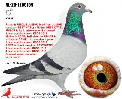 GOL_CE4CD3-9409AB-B76B8E-156053-687D1E-078114.jpg