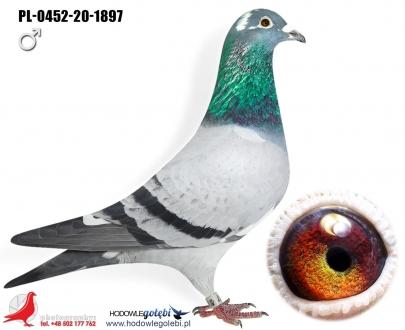 GOL_CFFA49-CF6457-2D6AE1-6F0744-513B5A-1F5AF7.jpg
