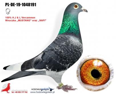GOL_D036EA-71236D-9CE3AD-0BF57E-1EAAC0-5BA8FD.jpg